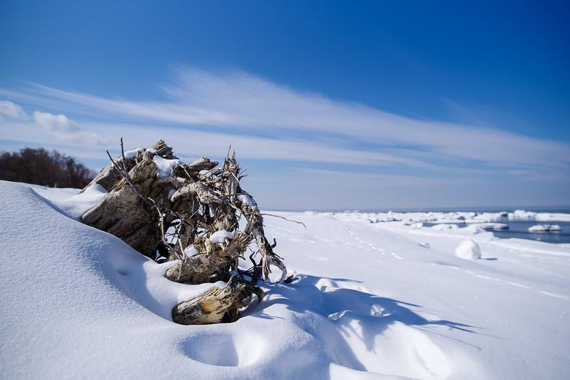 ウトロの海岸の流木.jpg