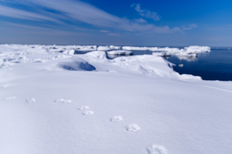 ウトロ海岸の足跡